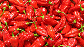 Jolokia peppers Royalty Free Stock Photos