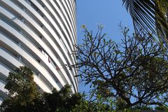 Jomtien Beach buildings and Plumeria tree Royalty Free Stock Photography