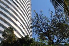 Jomtien Beach buildings and Plumeria tree. Pattaya Jomtien Beach High Royalty Free Stock Photography