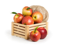 Jonagold Apples Royalty Free Stock Photos