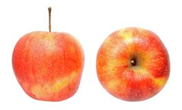 Jonagold apples Royalty Free Stock Image