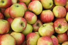 Jonagold apples Royalty Free Stock Images