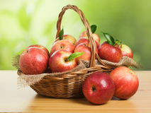 Jonagold Apples in a Basket Stock Image