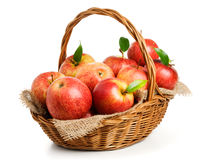 Jonagold Apples in a Basket. On white background Royalty Free Stock Image