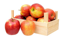 Jonagold apples in basket Royalty Free Stock Photography