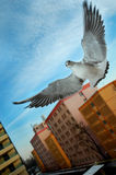 Jonathan. Bold seagull in Bucharest, Romania Royalty Free Stock Images