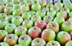 Jonathan green apples. Image of a table full of tasty Jonathan green apples royalty free stock photos