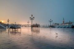 Jonathan Livingston in Venetië stock foto's