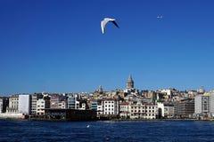 Jonathan Livingstones of İstanbul stock photos