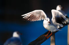 Jonathan the sea gull Stock Photo