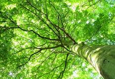 Joncteur réseau d'arbre images libres de droits