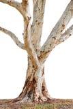 Joncteur réseau d'arbre Image stock