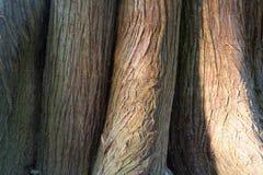 Joncteur réseau d'arbre Photos stock