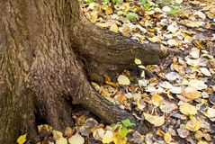 Joncteur réseau d'arbre Image libre de droits