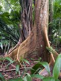 Joncteur réseau d'arbre Photo stock