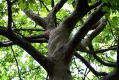 Joncteur réseau d'arbre branchu Images libres de droits