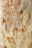 Joncteur réseau d'arbre découpé Photos libres de droits