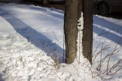 Joncteur réseau d'arbre dans la neige Photo libre de droits