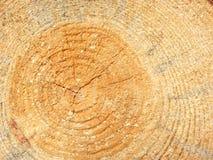 Joncteur réseau d'arbre de pin Photo libre de droits