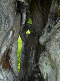 Joncteur réseau d'arbre mort Photographie stock libre de droits