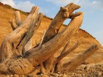 Joncteur réseau d'arbre sec Photographie stock