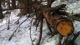 Joncteur réseau d'arbre tombé images stock