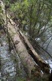 Joncteur réseau d'arbre tombé photos stock