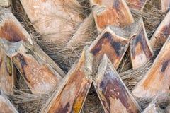 Joncteur réseau d'un plan rapproché de palmier Photos libres de droits