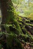 Joncteur réseau de forêt d'automne Photographie stock
