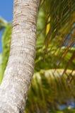 Joncteur réseau de palmier Photo libre de droits