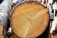 Joncteur réseau en bois Photographie stock