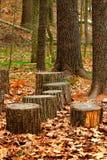 Joncteurs réseau d'arbre Photographie stock libre de droits
