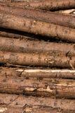 Joncteurs réseau en bois photo libre de droits