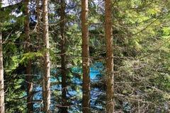 Joncteurs réseau et branchements d'arbre de pin Photo stock