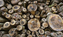 Joncteurs réseau d'arbre abattus Photos stock
