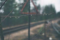 Jonction de chemin de fer Signe de route Triangle rouge Fond brouill? Gouttes de pluie sur des branches photo stock
