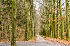Jonction de deux chemins de terre dans une forêt photographie stock libre de droits