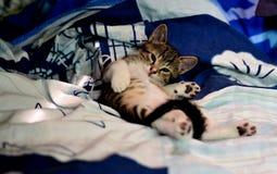 Jong Aanbiddelijk Katje Royalty-vrije Stock Foto