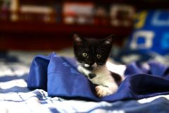 Jong Aanbiddelijk Katje Stock Foto