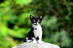 Jong Aanbiddelijk Katje Royalty-vrije Stock Foto's