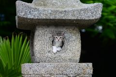 Jong Aanbiddelijk Katje Royalty-vrije Stock Fotografie