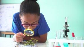 Jong Afrikaans Amerikaans gemengd jong geitje gebruikend een vergrootglas op een groene installatie in chemie en biologieklasloka stock video