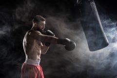 Jong bokserponsen Stock Foto