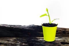 Jong boompje in een pot Stock Afbeelding