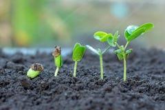 Jong boompje het groeien van de grond royalty-vrije stock foto