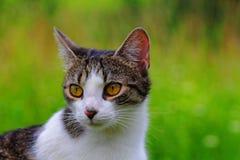 Jong brutaal kattenportret Stock Foto's