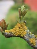 Jong die gebladerte op een boom met geel mos wordt behandeld stock foto