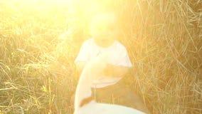 Jong geitje in de witte overhemdsspelen met een hond in een hooiberg op een gebied stock videobeelden