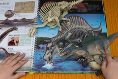 Jong geitje die een Spinosaurus en een skelet controleren tegen een boek met details van dezelfde dinosaurus Stock Afbeeldingen