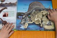 Jong geitje die een Spinosaurus-skelet controleren tegen een boek met details van dezelfde dinosaurus Stock Afbeelding